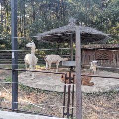 瀋陽森林動物園用戶圖片