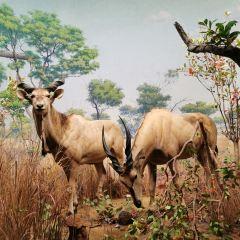 美國自然歷史博物館用戶圖片