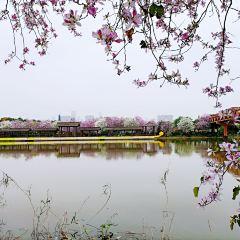 Haizhu National Wetland Park User Photo