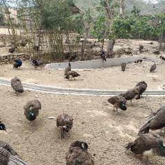 青島森林野生動物世界用戶圖片