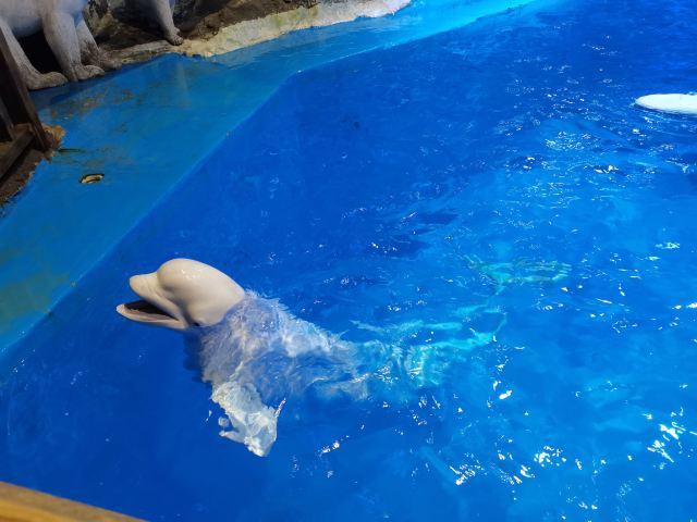 Qingdao Haichang Polar Ocean Park