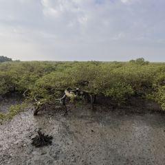 北海金海灣紅樹林生態旅遊區用戶圖片