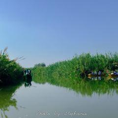 Sihong Hongze Lake Wetland User Photo