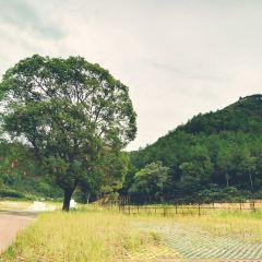木蘭云霧山用戶圖片