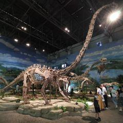 쯔궁 공룡 박물관 여행 사진