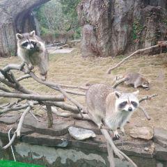 雅戈爾動物園用戶圖片