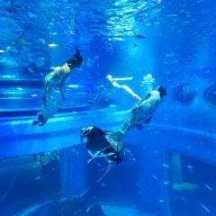 包頭海洋世界用戶圖片