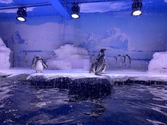 Beihai Undersea World