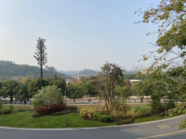 홍시 관광단지