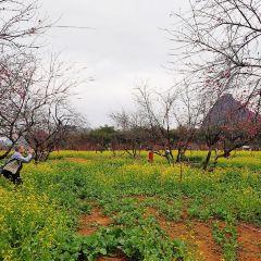 Jiulong Town User Photo