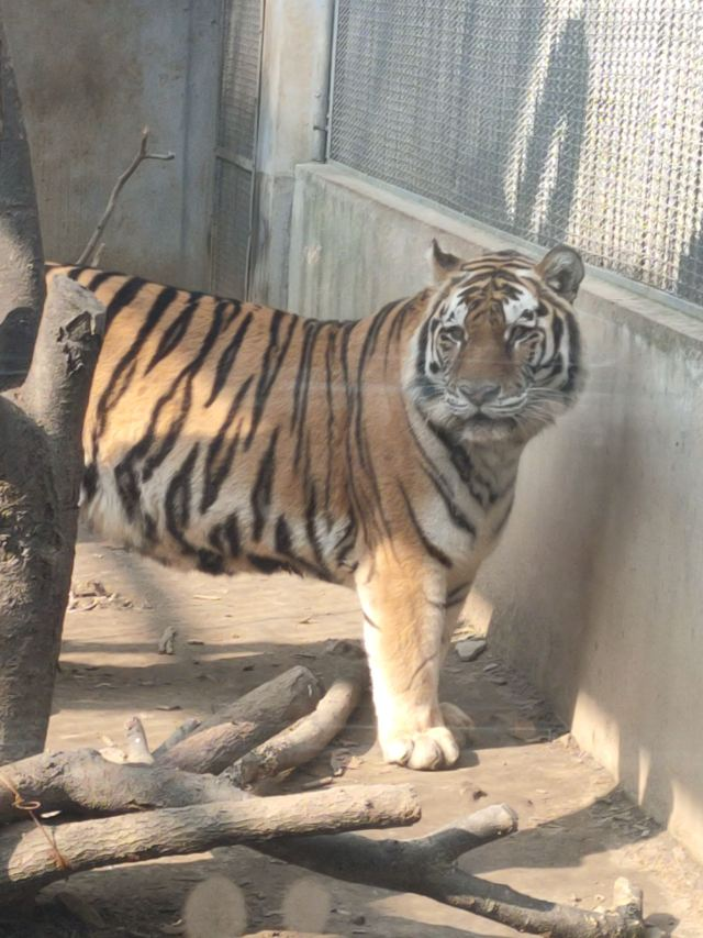 우한동물원
