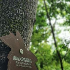 紅葉森林公園用戶圖片