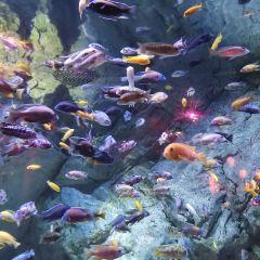 Ningbo Ocean World User Photo