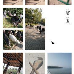 Shenyang Bird Island User Photo