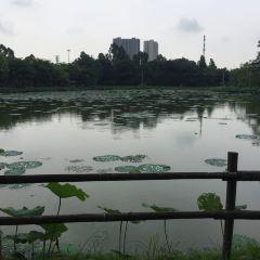 夢里水鄉百花園用戶圖片
