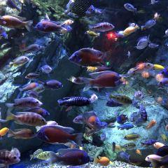 寧波海洋世界用戶圖片