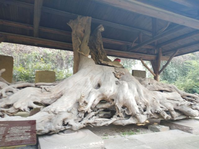 保國寺古建築博物館