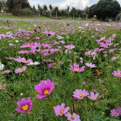 Wing Kee Farm Park User Photo