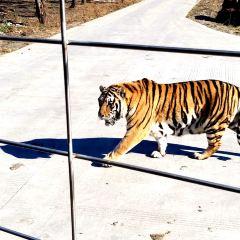 Northeast Tiger Forest Park User Photo