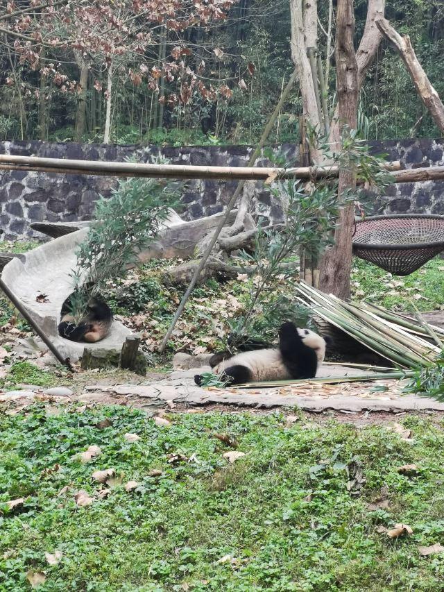 중국 자이언트판다 보호연구센터, 두장옌기지
