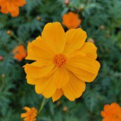 닝보 식물원 여행 사진