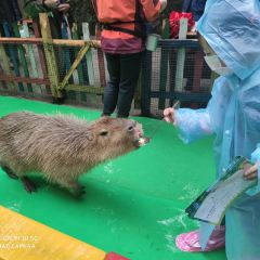 Bifengxia Wildlife Park User Photo