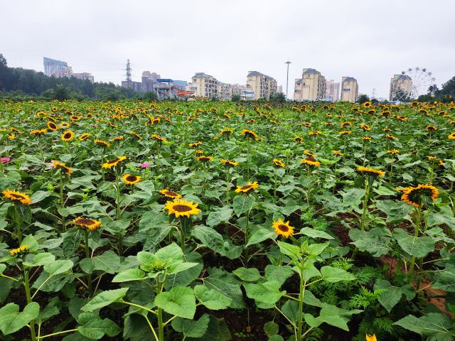 Hunan Forestry Botanical Garden