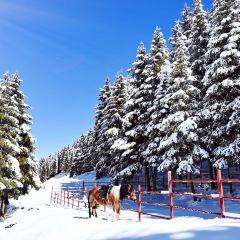 新疆鹽湖景區用戶圖片