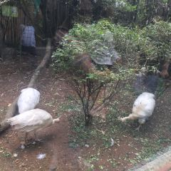 Hongshan Forest Zoo User Photo