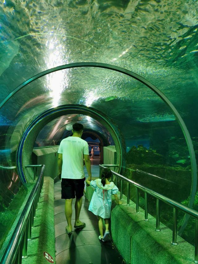 신아오하이디스제 해저세계