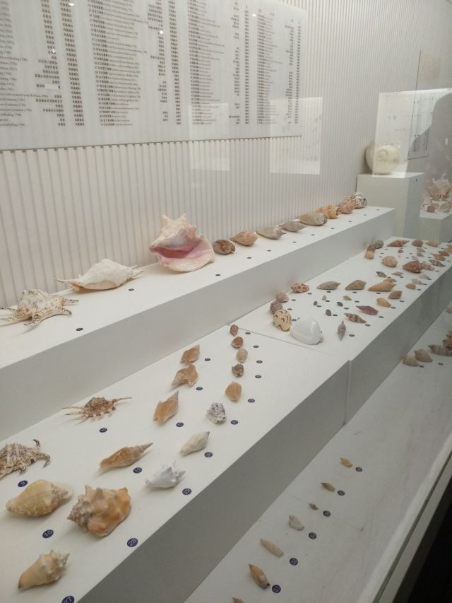 Shell Museum