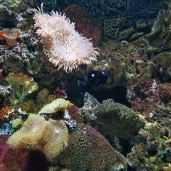 鷗興海洋世界用戶圖片
