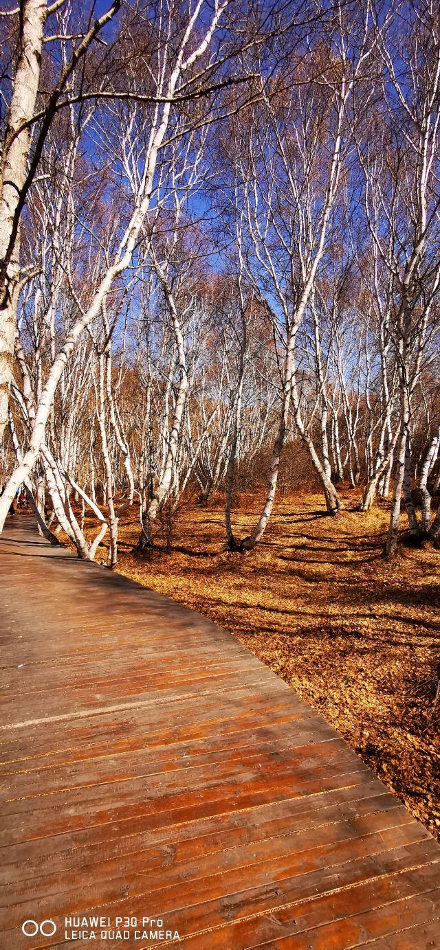神仙穀七彩森林