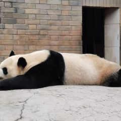 China's Giant Panda Conservation Research Center, Dujiangyan Base User Photo