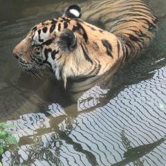 타이저우 야생동물원 여행 사진