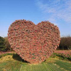 仙鳳三寶農業休閒觀光園用戶圖片
