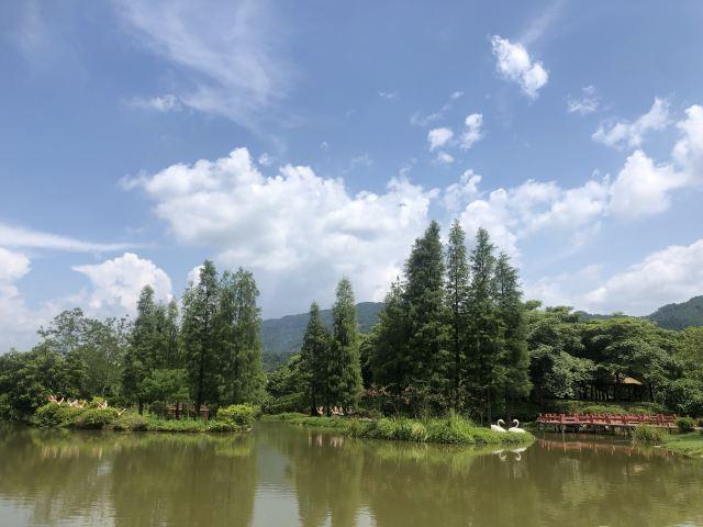 썬보라 관광 휴가 삼림
