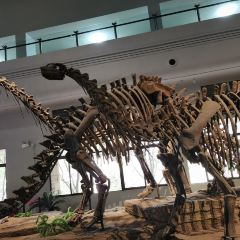 Zigong Dinosaur Museum User Photo