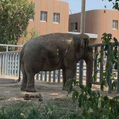 Jinan Zoo User Photo