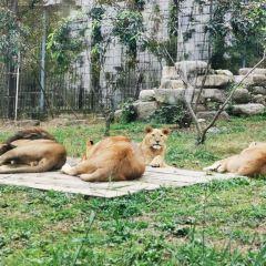 上方山森林動物世界用戶圖片