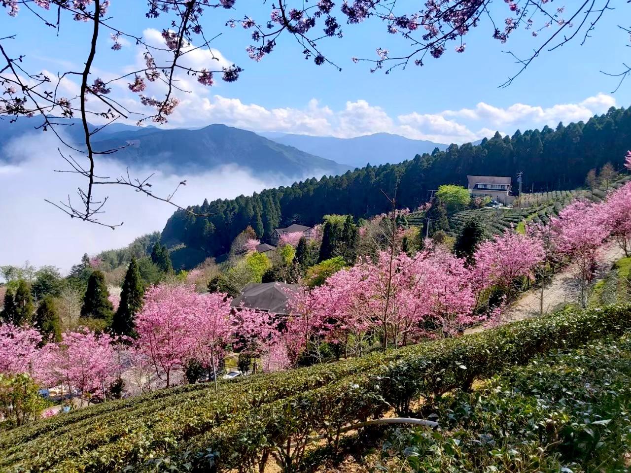 台北出發 新竹山上人家歐風假期一日遊