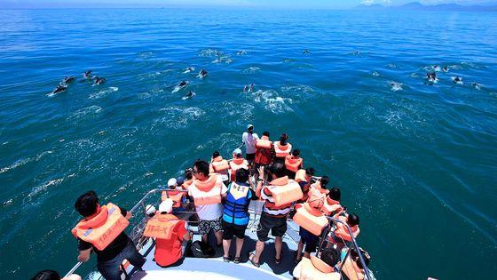 花蓮 多羅滿賞鯨體驗