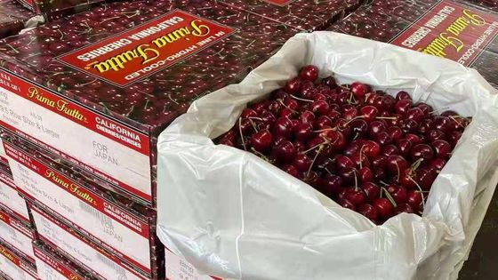 「フルーツ」アメリカ合衆国輸入アメリカ産アメリカンチェリー【2kg/4kg/8kg/16kg】【期間限定販売・送料無料・即時発送】