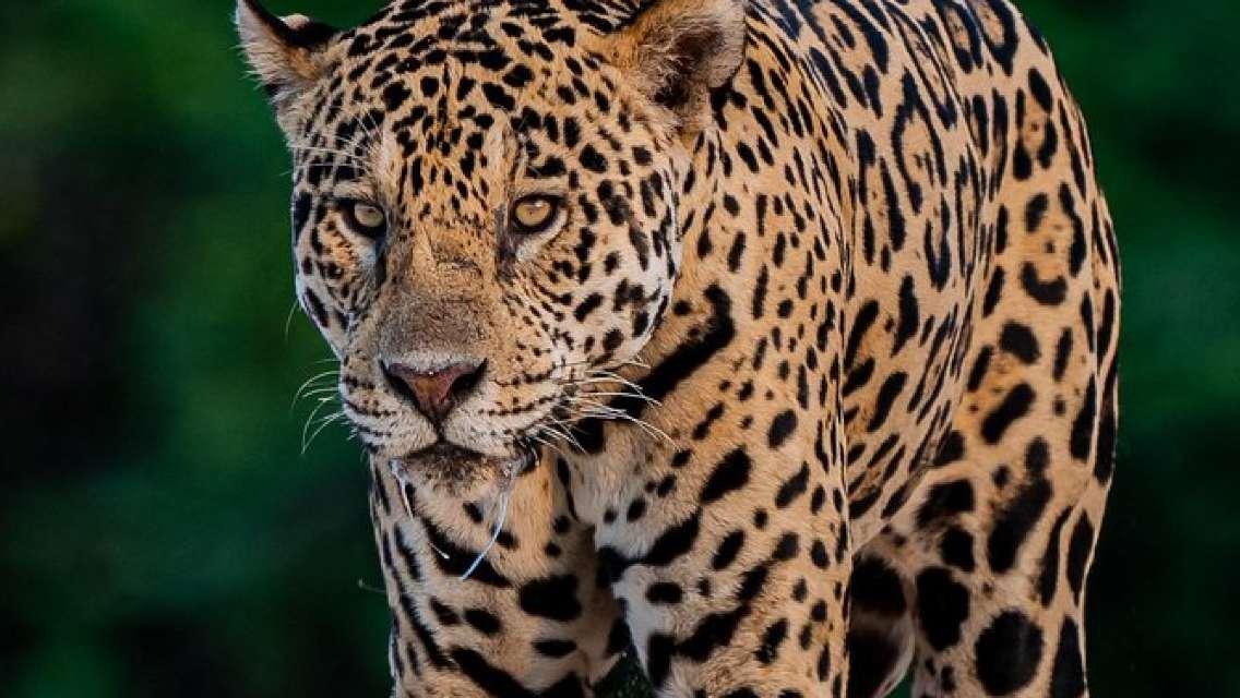 Jaguar extreme 8 nights