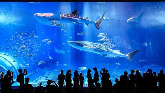 【GoTo35%OFF】沖縄美ら海水族館と万座海中展望船・古宇利島・美浜アメリカンビレッジコース