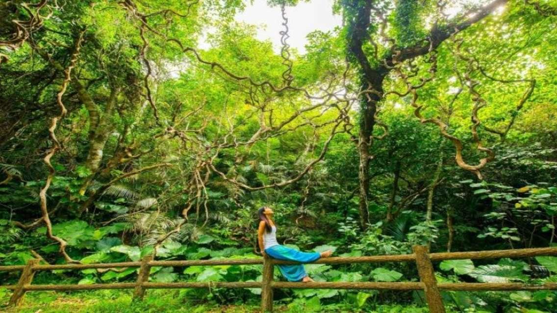 石垣島 亜熱帯の森散歩&森林浴ヨガプラン
