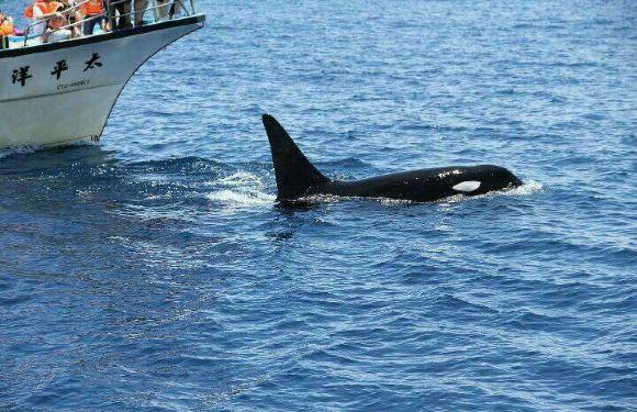 太平洋賞鯨豚之旅+導覽解說