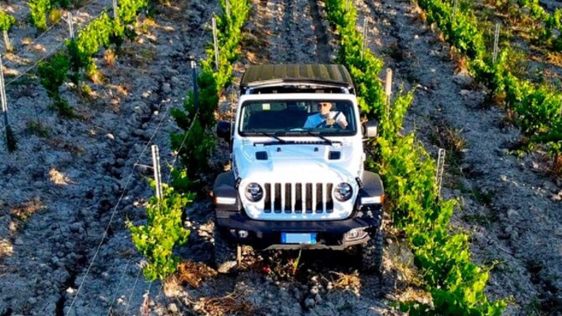Safari Wine Tour