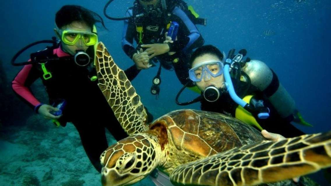 Sunlover Reef Cruises Day Tour Combos