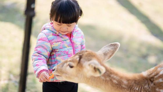 小琉球鹿粼梅花鹿園區門票